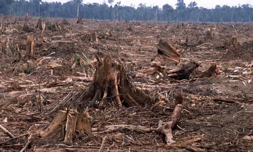 disadvantages of cutting forests What are 3 disadvantage of clear cutting clera cutting forest is cutting down every standing tree in a given area are there disadvantages to wearing clear.